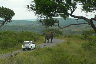 """Big 5"" Safari Tour - The elephant leads the way!"